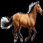 Horse Sound