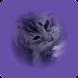 Cute HD Cats Wallpaper