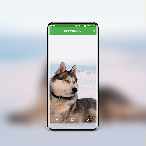 best dog wallpapers and themes all breeds screenshot 3