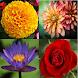 花の識別子