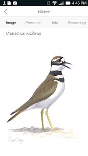 Song Sleuth: Auto Bird Song ID w/ David Sibley 5