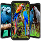 Download Cute Parrot Wallpaper HD For PC Windows and Mac
