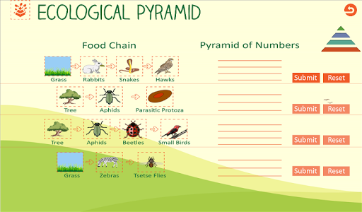 Ecological Pyramid-Food Chain For PC Windows (7, 8, 10, 10X) & Mac Computer Image Number- 19