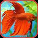 Aquarium Fish Freshwater free