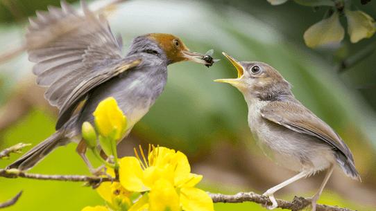 Bird Sounds – Nature Bird Calls & Ringtones 5