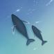 고래의 바다 카톡테마