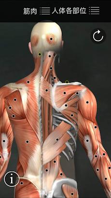 筋のトリガーポイントのおすすめ画像1