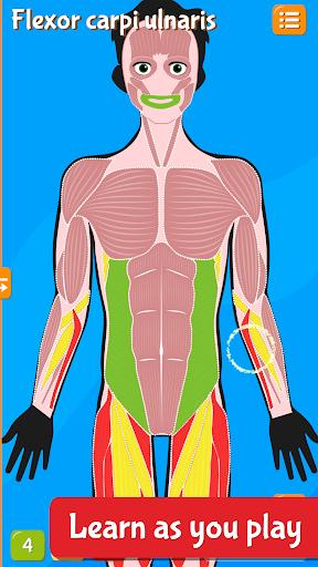 Anatomix - Human Anatomy screenshots 2