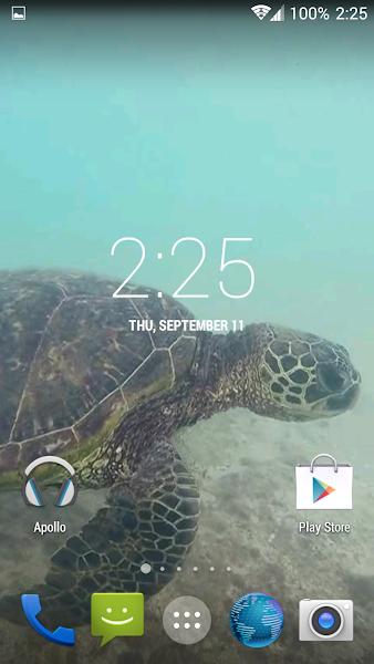 Sea Turtle HD. Wallpaper