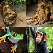 Animal Quiz: Guess the Animal