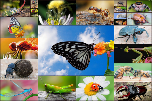 Insect Jigsaw Puzzles Game - For Kids & Adults 🐞 screenshots 1