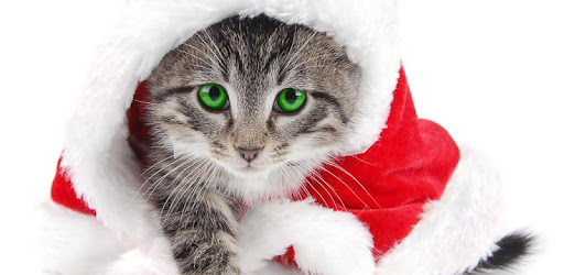 Christmas Cat Live Wallpaper Apps On Google Play