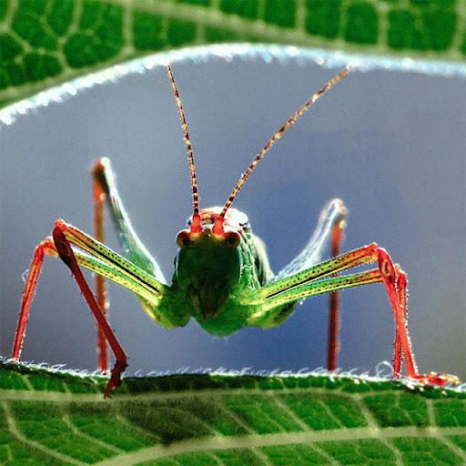 Insects Jigsaw Puzzles apkdebit screenshots 15