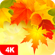 Autumn Wallpapers 4K