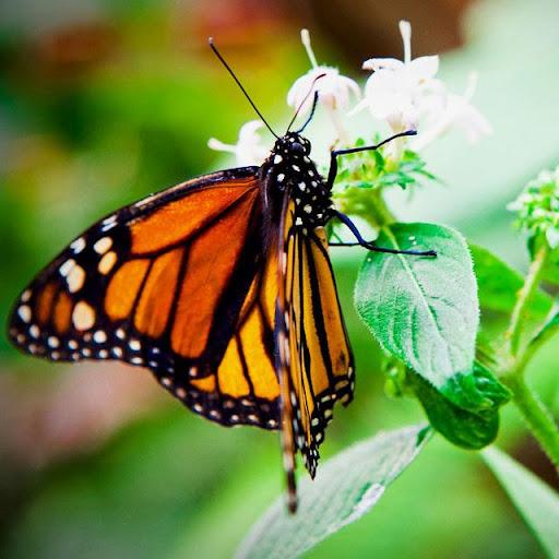 Butterflies Jigsaw Puzzles screenshots 7