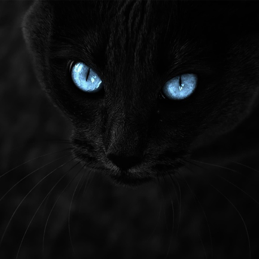 Black Cats Live Wallpaper Apps On Google Play