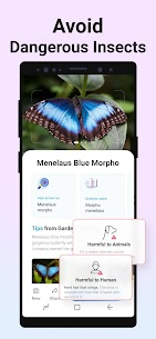 Free Picture Insect – Bug Identifier 3