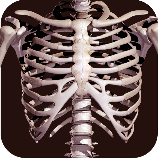 Baixar Osseous System in 3D (Anatomy) para Android