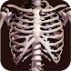 3D人骨(解剖学)