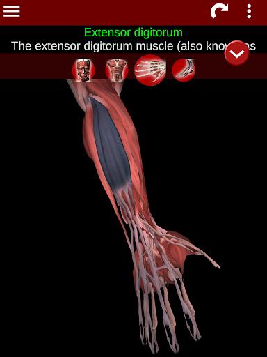 Muscular System 3D (anatomy) 2.0.8 Screenshots 19