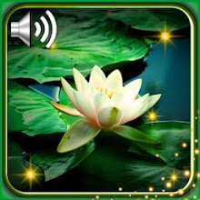 Lily Water Lotus Live Wallpaper Download on Windows