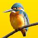 見つけた!野鳥図鑑 - Androidアプリ