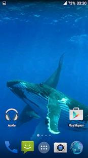 Whale 3D. Video wallpaper
