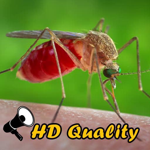 Pin Di Aplikasi Anti Nyamuk