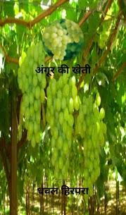 अंगूर की खेती 1