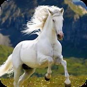 Horse Wallpaper Best 4K