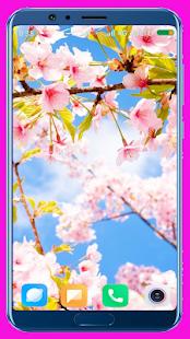 Cherry Blossom Wallpaper Best 4K