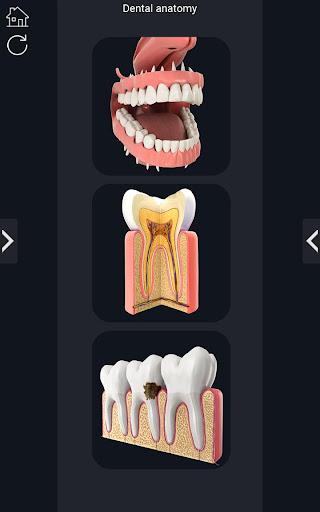 Dental  Anatomy Apk 1