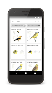 Collins Bird Guide 4