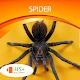 Spider Wallpaper para PC Windows