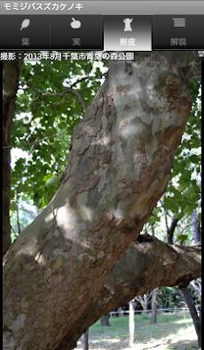 シンプル植物リスト〜樹木編〜のおすすめ画像3