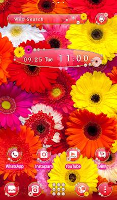 花壁紙アイコン カラフルなガーベラ 無料 Androidアプリ Applion