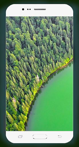 Forest Wallpaper HD Screenshots 10