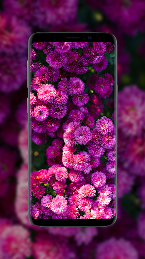 ud83cudf3a Flower Wallpapers - Colorful Flowers in HD & 4K 3.0.23 screenshots 2