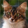 쉬운 고양이 퍼즐