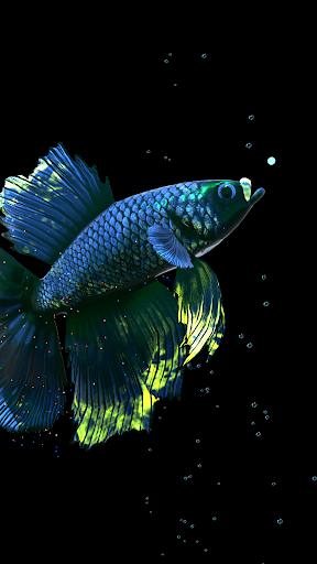 Betta Fish Live Wallpaper FREE 1.4 Screenshots 7
