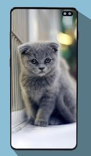Kitten Wallpapers 3