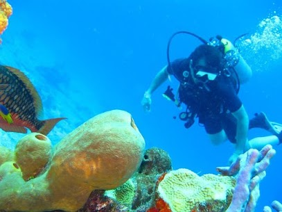 Scuba Diving Live Wallpapers For Pc | How To Install (Windows 7, 8, 10 And Mac) 1