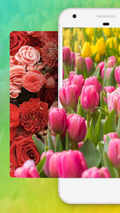 Flower Wallpaper HD Free