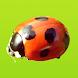 見つけた!昆虫図鑑 - Androidアプリ