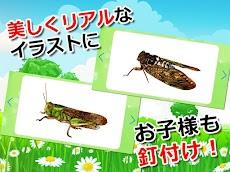 昆虫カード 子供向け図鑑 教育・知育・英語のおすすめ画像3