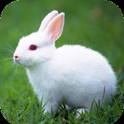 Rabbit Wallpaper HD