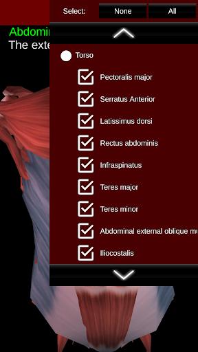 Muscular System 3D (anatomy) 2.0.8 Screenshots 5