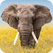 Wildlife Weather - Androidアプリ