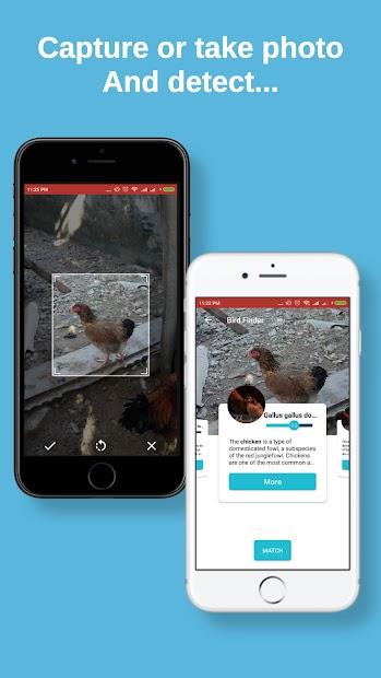 Bird finder: bird identification, bird wallpaper screenshot 3