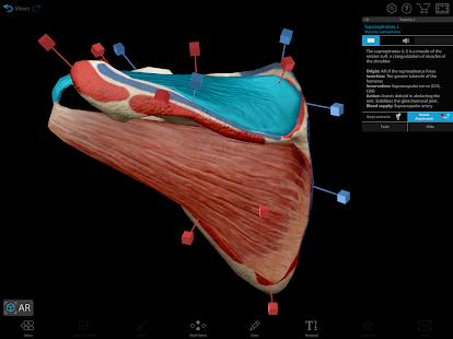 Human Anatomy Atlas 2021:u00a0Complete 3D Human Body 2021.2.27 Screenshots 19